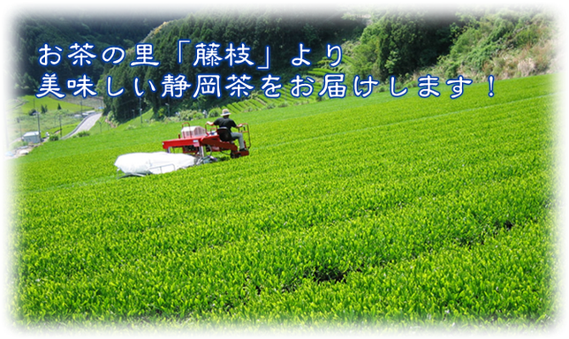 マルミヤ製茶 藤枝