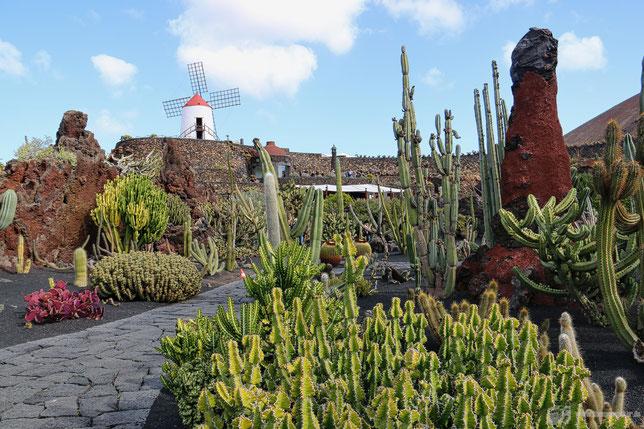 Wer mag Kakteen? Im Jardin de Cactus gibt es genug davon...