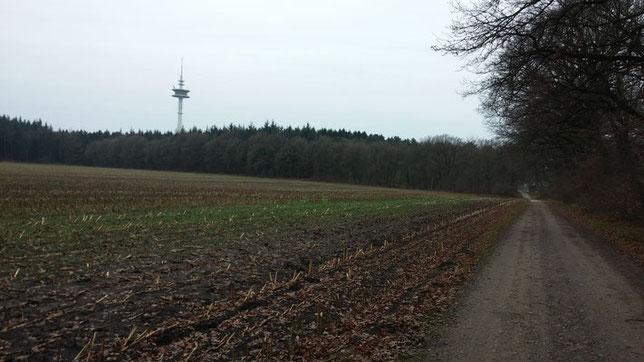 Feldweg hinterm Wald in Haddorf