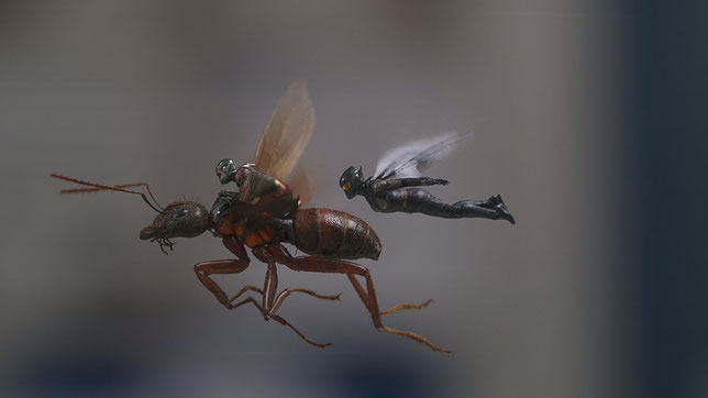 Ant-Man et la Guêpe: deux héros Marvel se déplacent grâce à une (vraie) guêpe (©Disney/Marvel).