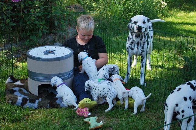 Ice-T vom Furlbach mit seinen Welpen der Zuchtstätte Krydhundens Kennel 4 Wochen alt...14 Juni 2016
