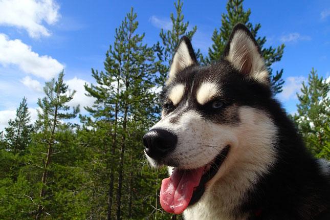 Praxishund Nelly