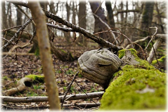 Der lächelnde Baumpilz
