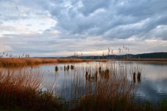 Blick in die Flachwasserzone im Wollmatinger Ried - Foto: NABU/H. Hörster