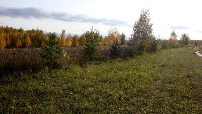 西北方的綠色活圍籬