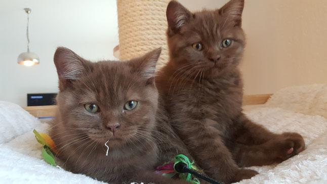 die Kätzchen beim Spielen