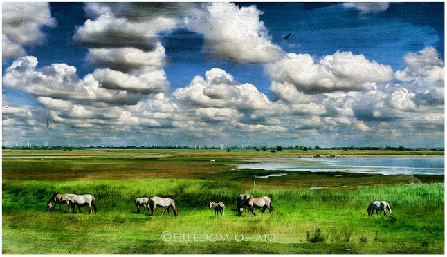 Weite Landschaft - wie gemalt