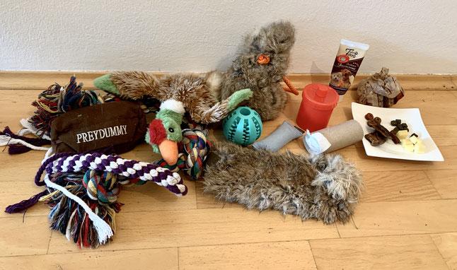 Belohnungen im Hundetraininig