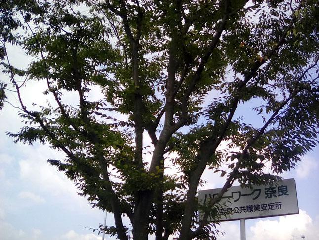 ハローワーク奈良の看板