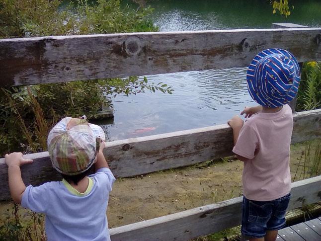 馬見丘陵公園の池の鯉や亀