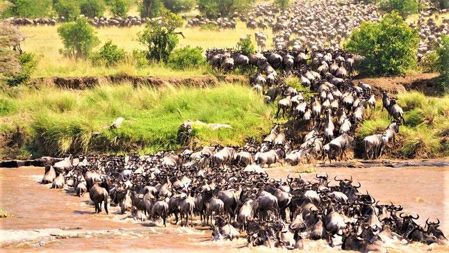 Schönste Nationalparks Afrika Safari- Masai Mara