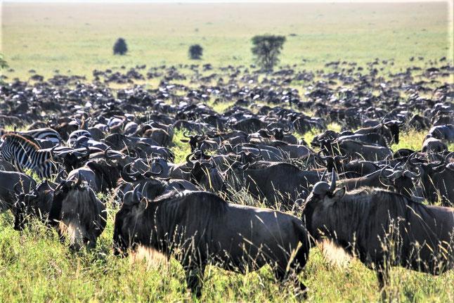 Schönste Nationalparks Afrika Liste: Serengeti