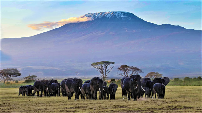 Bekannteste Nationalparks Afrika Safari Amboseli Nationalpark