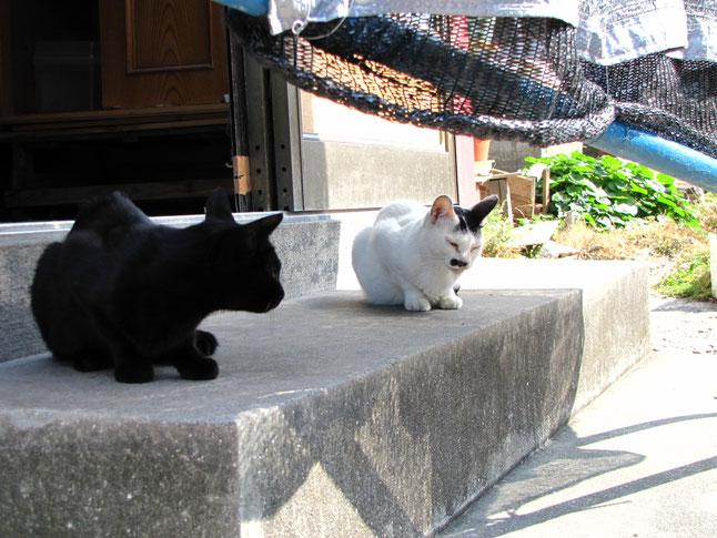 こんな風に猫達が出迎えてくれますよ