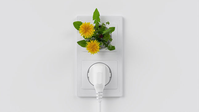 Mehr grüner Strom aus der Steckdose