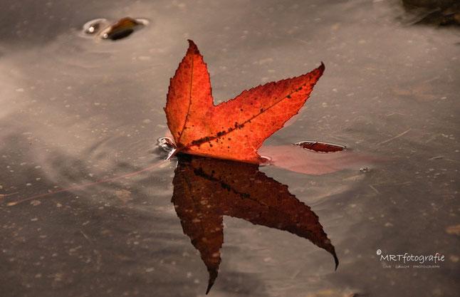 Rood esdoornblad met reflectie in plas water. | Compositie