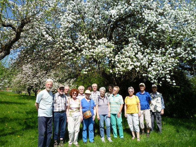 Voll erblühte Obstbäume erfreuten beim Rundgang des OGV. (Foto: Erich Heybach)