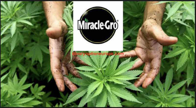 scotts miracle gro canapa legale