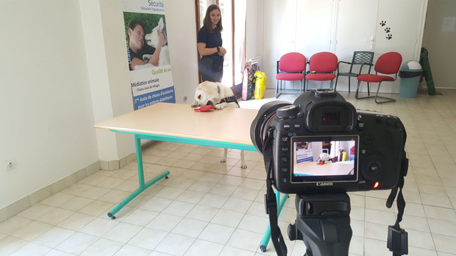Moon, la chienne d'assistance pour personnes diabétiques saisit le kit contenant les doses d'insuline, sur une table