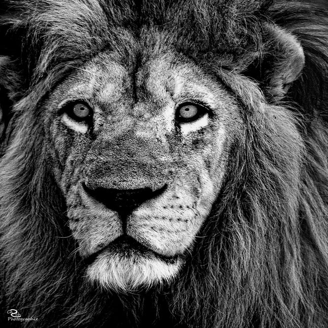 Dezember 2016 - Lion