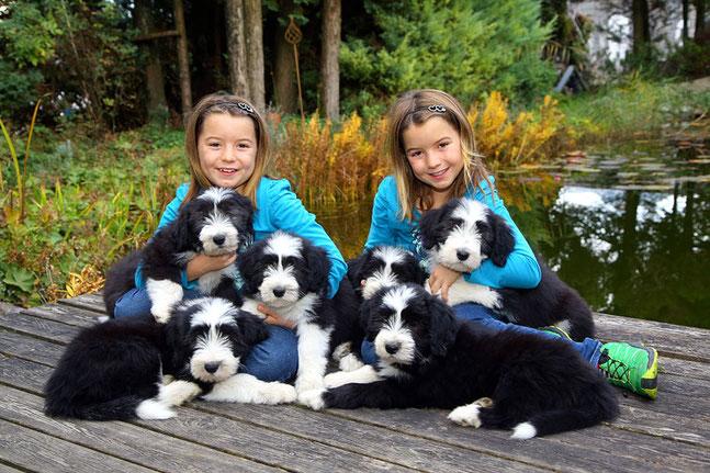 Ein Foto von damals- Geraldine, Gladys, Grace, Gulietta, Ginger und Great Glenn- Georgina ist schon bei ihrer Familie in Innsbruck