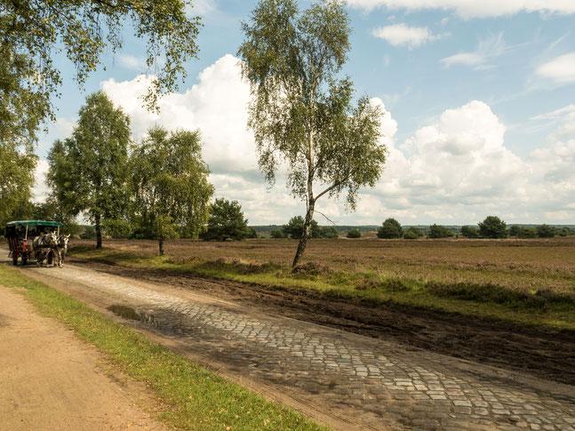 Bild: Lutschfahrt durch die Lüneburger Heide
