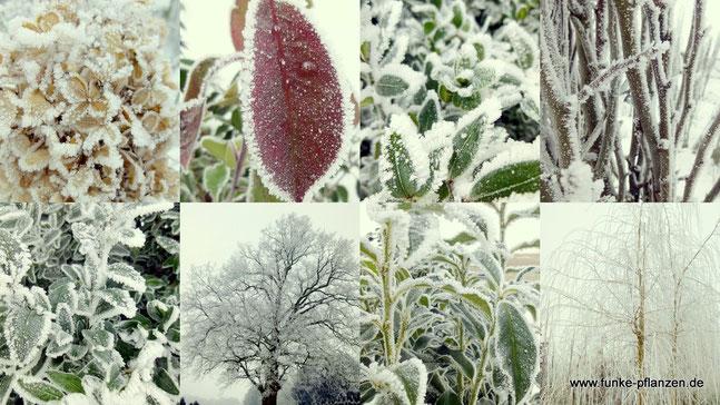 Die Faszination des Winters in unserer Baumschule in Visbek Kreis Vechta