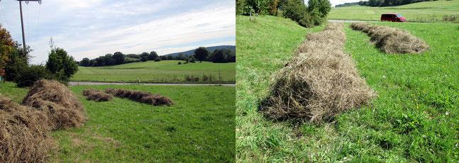 Gras auf Reihen setzen Foto: K-H Kuhn