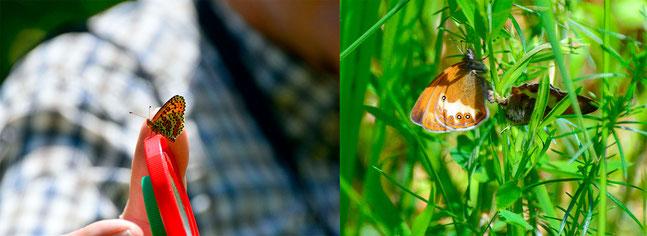 Schmetterlingsführung im Lautertal      Foto: K-H Kuhn