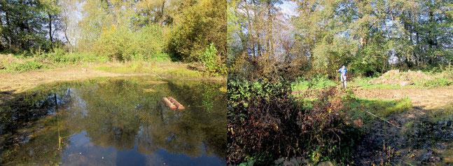 Neuer Teich Gomaringen Foto : K-H Kuhn