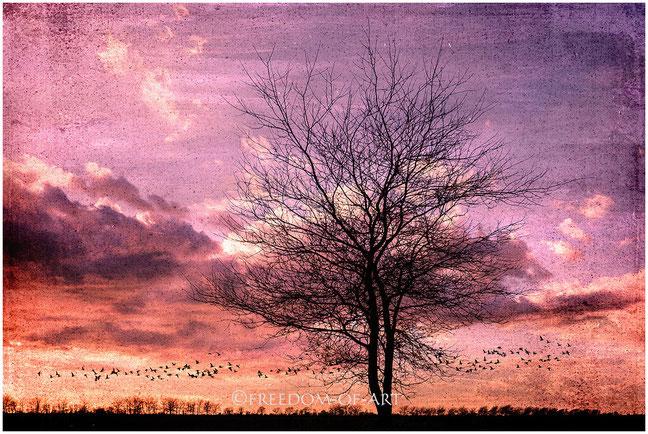 Baum mit Vogelschwarm im Abendrot