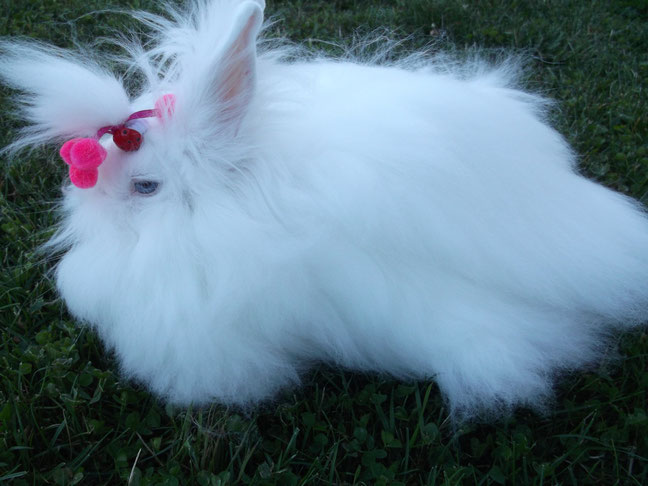 Ma Chantilly, blanche comme la neige!!
