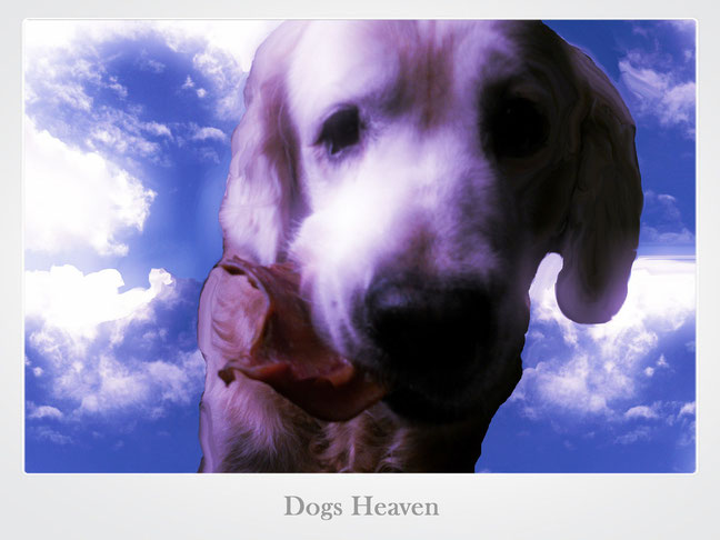 "Käpt'n Doggy in ""Dogs Heaven"""