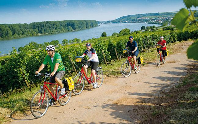 Zwischen Rhein und Reben © EUROBIKE TOURISTIK GmbH