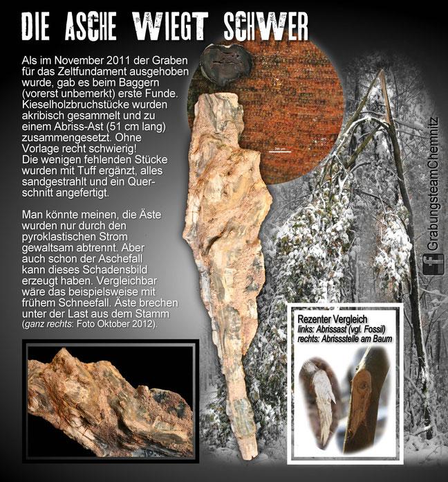 Funde Fossilien Versteinerter Wald Chemnitz