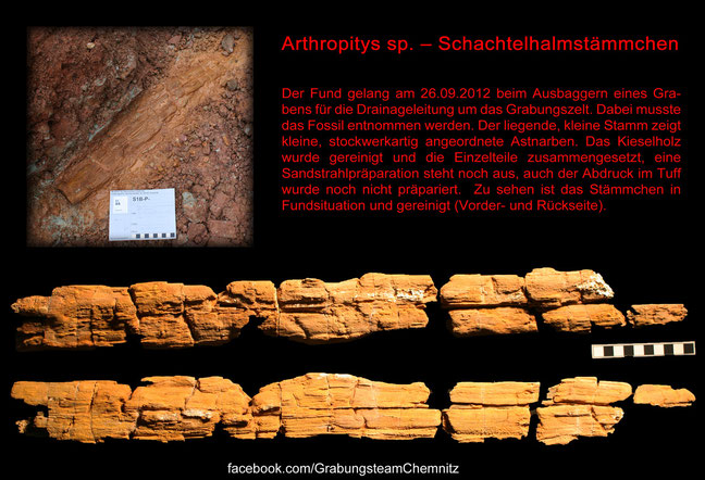 Grabungsteam Chemnitz Arthropitys
