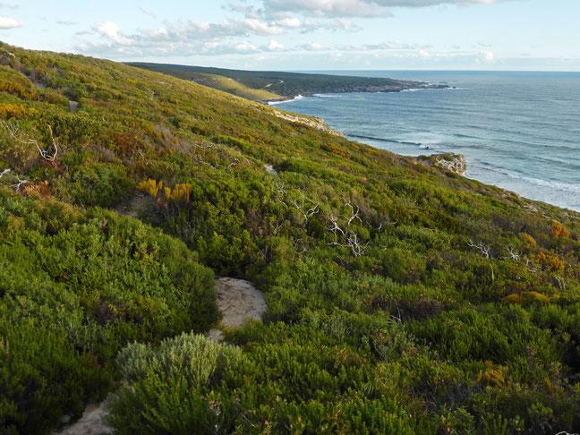 The walking track through the coastal heath