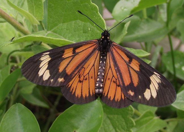 Butterfly El Jardin campsite and accomodation, Samaipata, Bolivia