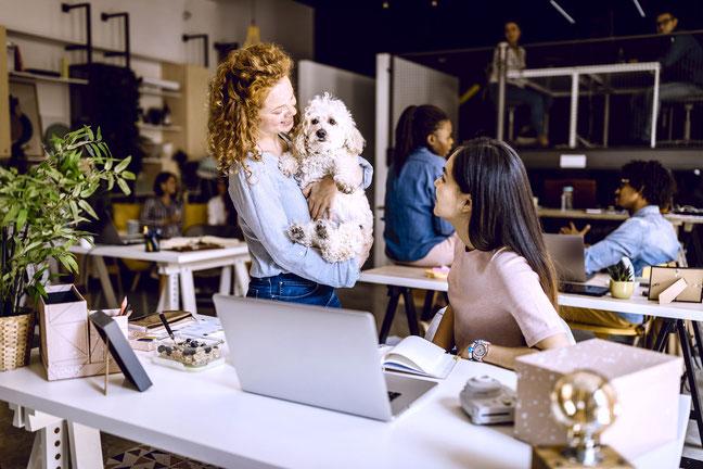 My Office Dog 2021. Wie war dein Kollege Hund Tag? Wir gehen in die Retrospektive. Schau sie dir an. Ich habe viel erlebt und erfahren.