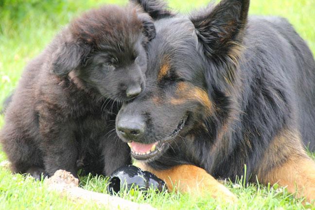 Pascha (Aavon-Hannes von der Wolfsmeile )