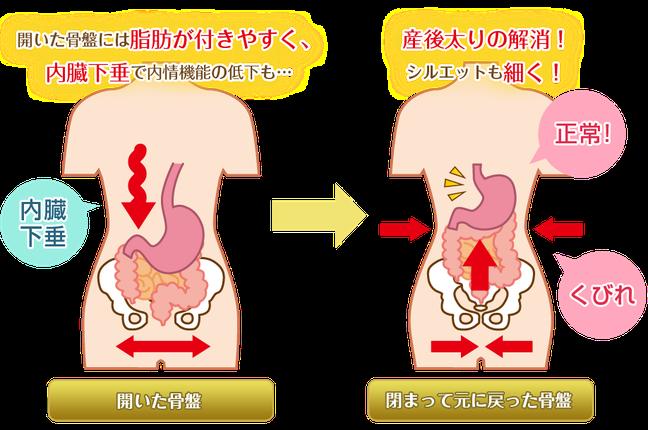 内臓のたるみにより骨盤の歪みをはじめ、内臓の機能低下を引き起こす原因となり、肌のハリや弾力なども低下することにつながります。内臓を正しい位置に整え、健康的な臓器の働きにすることで、たるみ改善やたるみの予防を。