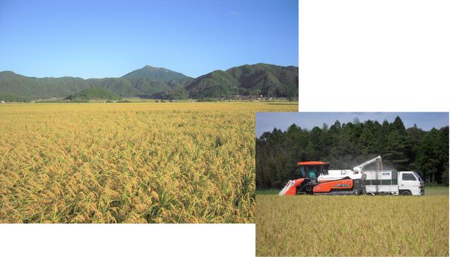 秋の収穫風景です。