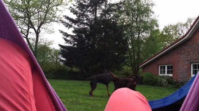 Hunde spielen vor Hängematte