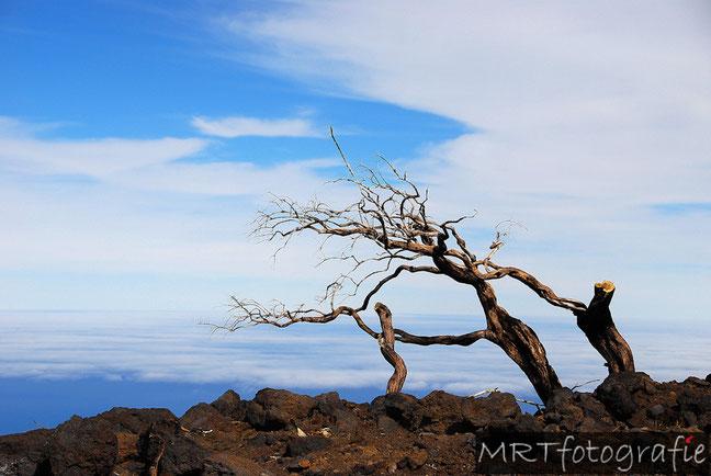 Dode boom in lava. La Palma| Compositie