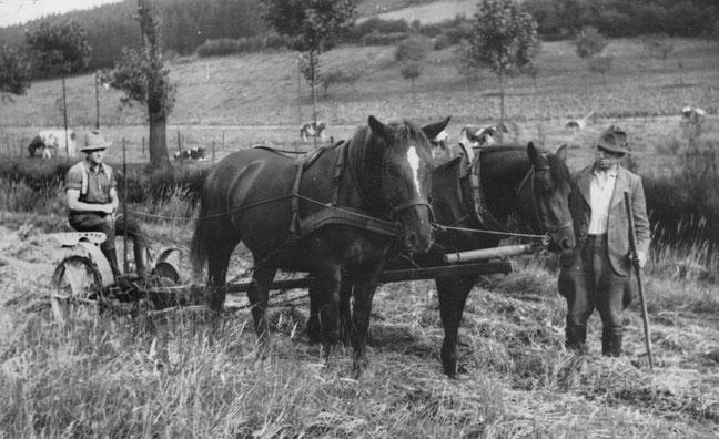 Ein denkwürdiger Moment, Sonntag 27.8.1939: Am folgenden Tag werden Josef und der Wallach Edith zur Wehrmacht eingezogen. Beide werden ihre Heimat nicht wiedersehen. Auf dem Grasmäher sitzt mein Vater Otto.