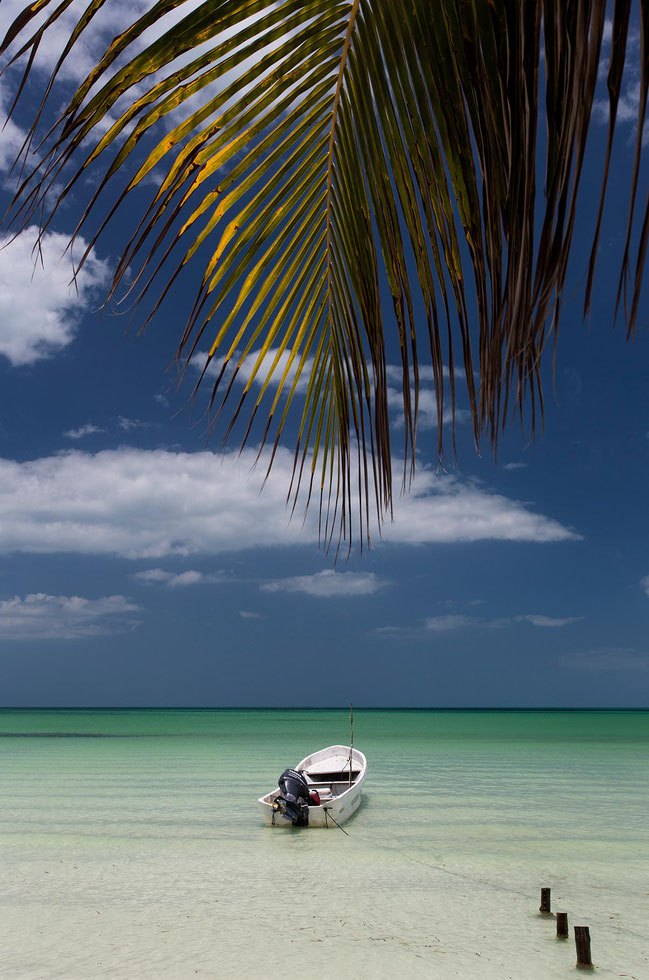 Boat and Palm Tree in the turquoise water of the Gulf of Mexico, Island Holbox, Yucatan Peninsula, Mexico, 1205x1820px