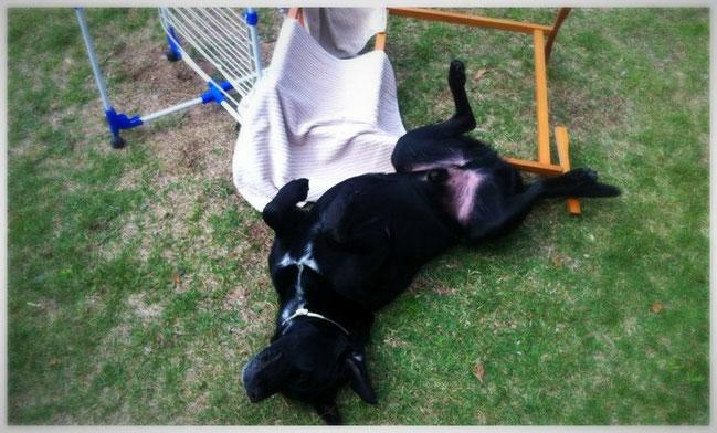 Problemhund Hundetrainer & Verhaltensberatung Bonn
