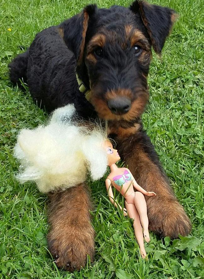 Arnie: Auch Jungs dürfen mit Puppen spielen ;-)