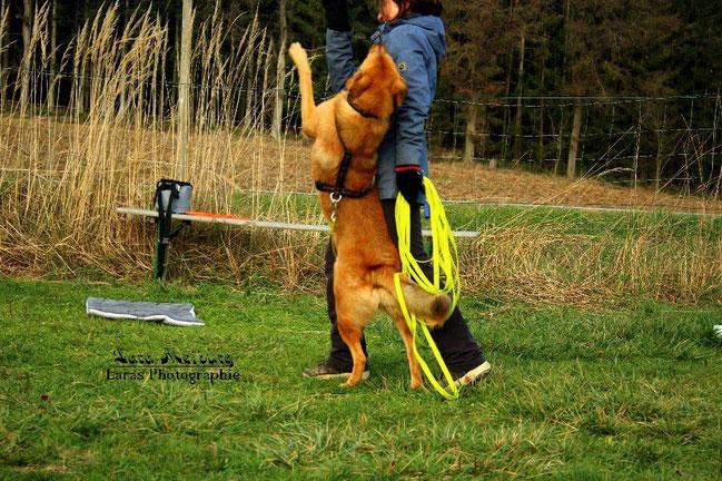 Ein Hund springt seine Halterin an.