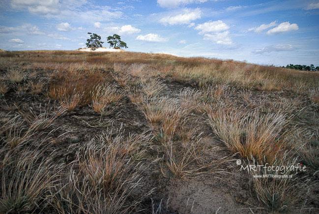 Kootzwijker Zand. | Compositie